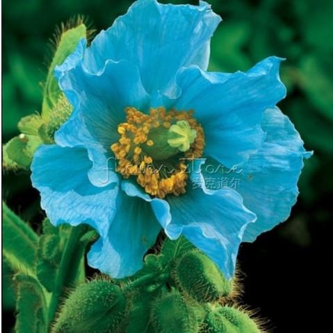 flor en crochet azul (26)